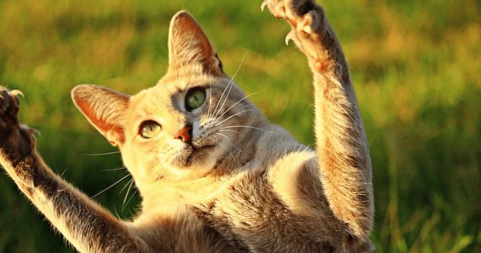 両手を挙げたネコ