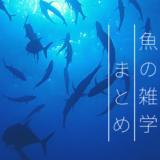 海中を漂う魚たち