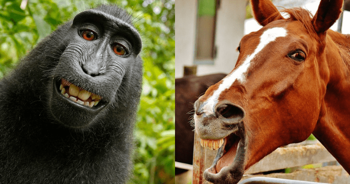 笑っている猿と馬