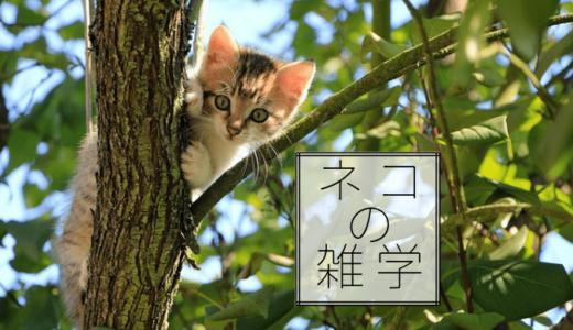 ネコの雑学・豆知識「宇宙に行ったネコがいる」など