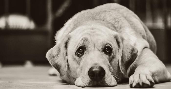 悲しそうな犬の画像