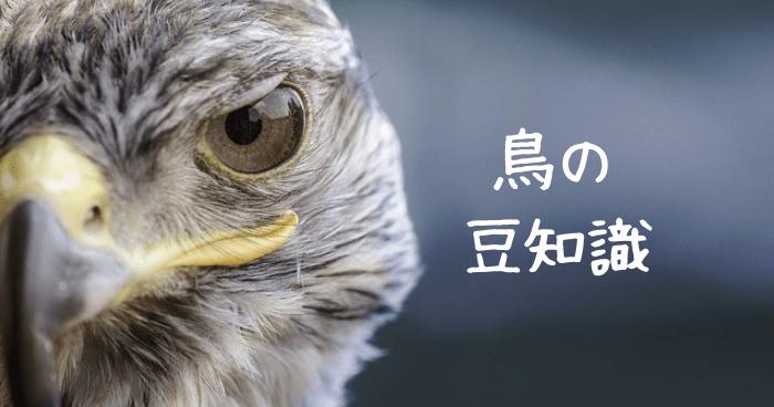 鳥の顔のアップ