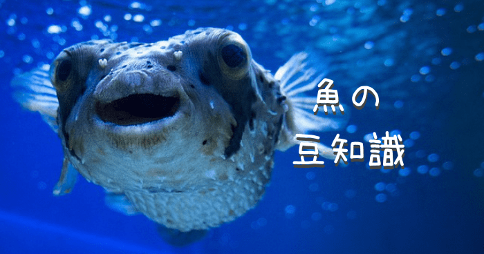 魚の顔のアップ