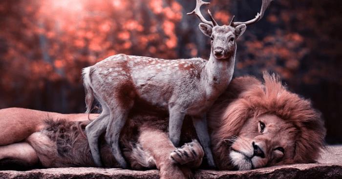 鹿と仲良くするライオン
