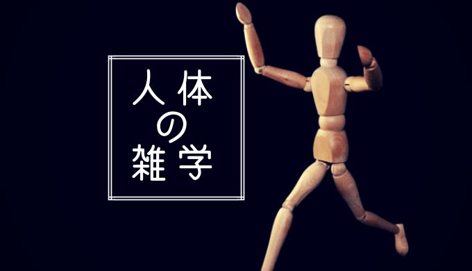 人の形の模型