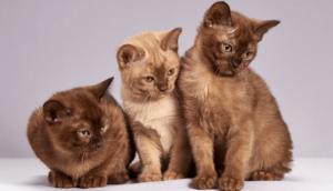 寄り添う3匹のネコ