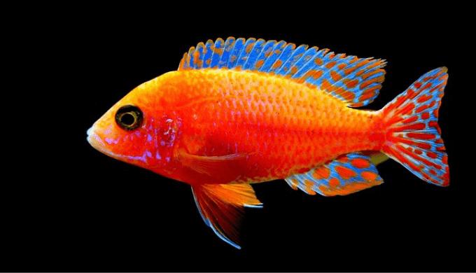 鮮やかな色の魚