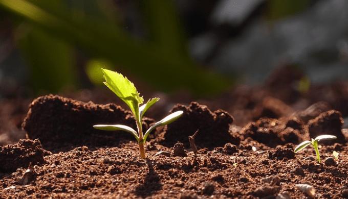 地面から生える植物の若い芽