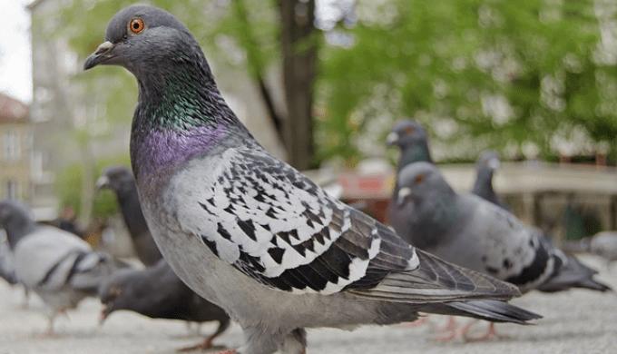 公園にいる鳩